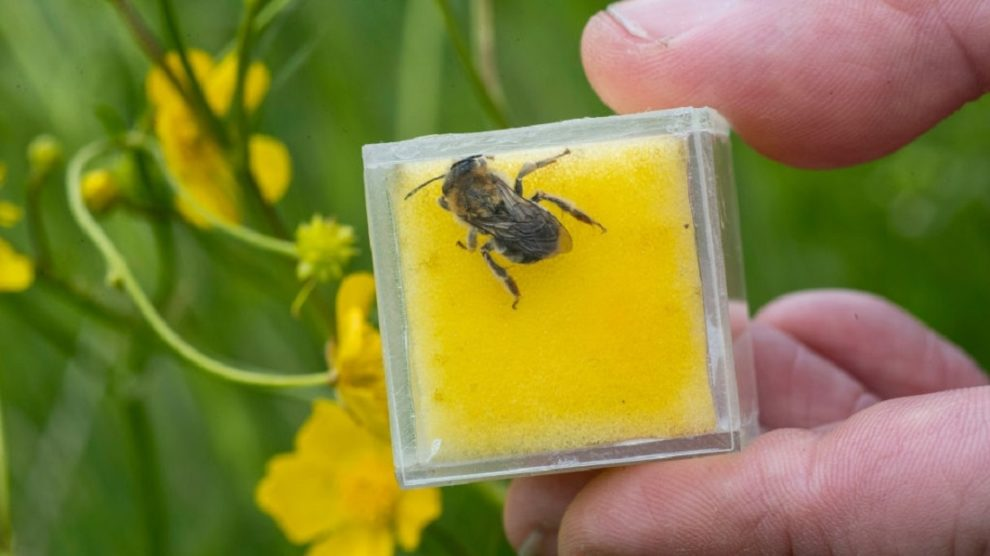 honeybee venom cures cancer